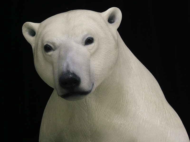 Polar Bear Right